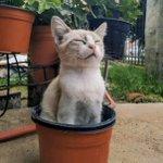猫が咲く?!咲いている?!植木鉢にすっぽり・・・!