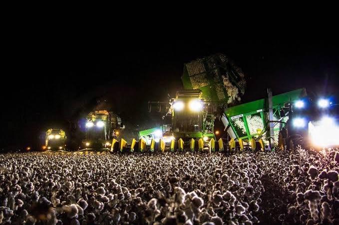 盛り上がっているサマフェスに見えるけど?綿の収穫の様子がこれ!