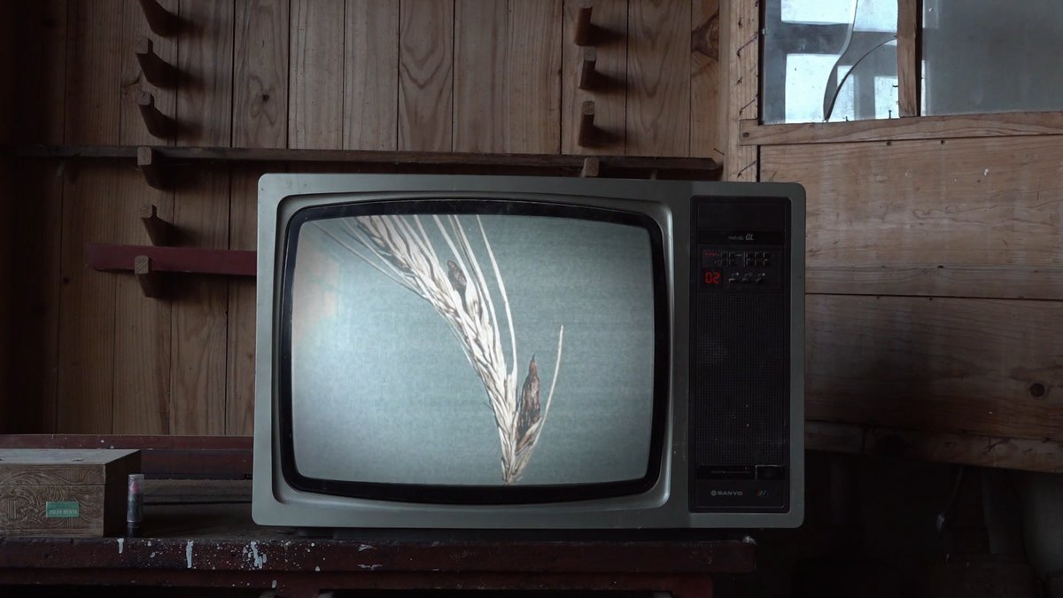 """Begin Again Films on Twitter: """"¡Qué ganas tenemos de que conozcáis NEGRO  PÚRPURA! LSD, multinacionales farmacéuticas, plagas medievales, medicina  popular y la CIA conectadas por un hongo alucinógeno. NEGRO PÚRPURA.  Estreno en"""
