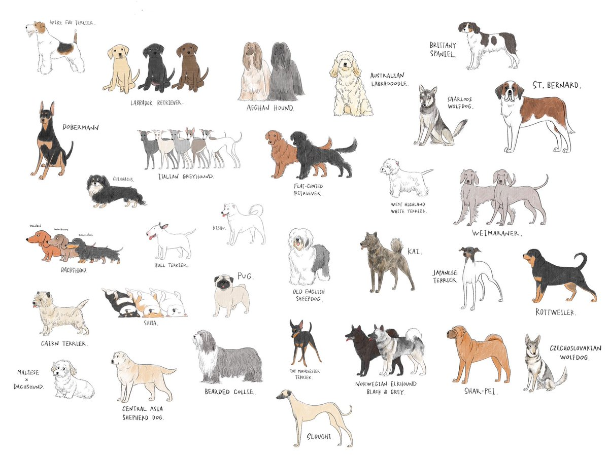 とんでもない数の犬を描いているイラストレーター!好きな犬種は見つかった??