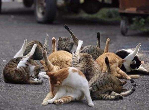 【同時多発ペロ】偶然か?!それとも?!ネコの見事なシンクロ