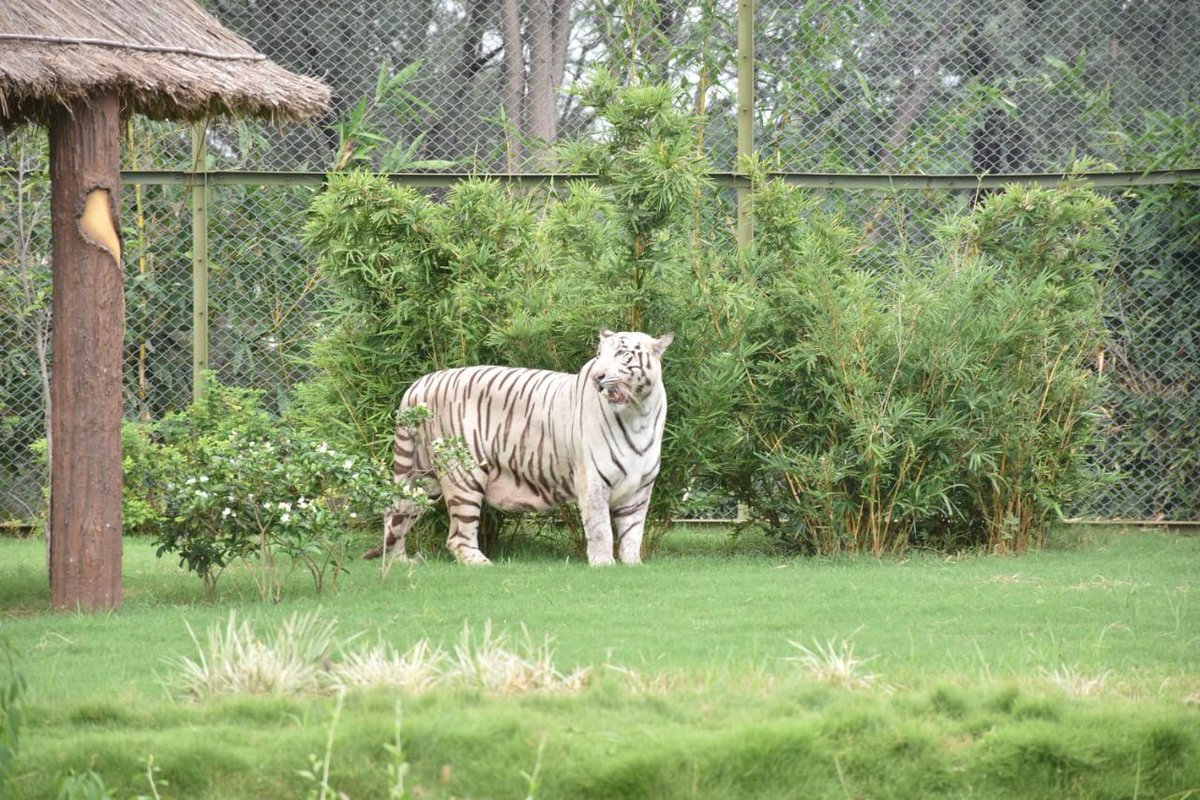 Indroda Park Gandhinagar gets open moat for Lions, Tigers and Panthers