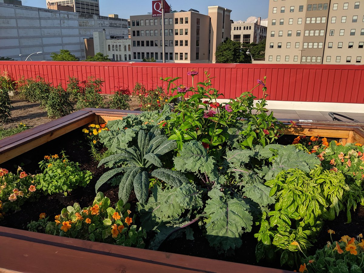 The #rooftopgarden is coming along nicely! #downtownsyracuse #rooftopfarm #rooftoppatio #eatlocal #farmtotable<br>http://pic.twitter.com/JDVkgkDRz3