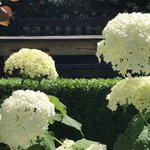 Image for the Tweet beginning: Hydrangeas have a strong presence