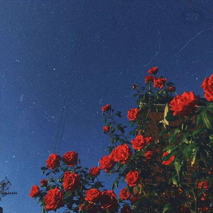 Photography Aesthetic Tumblr Love