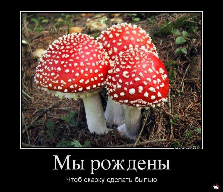 Днем, приколы о грибах картинки