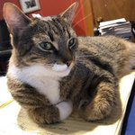 Image for the Tweet beginning: Our trusty #officekitty by my