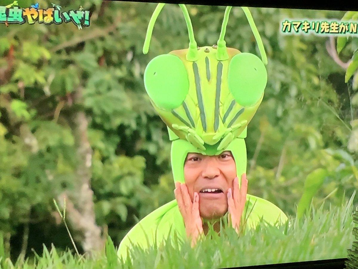 昆虫 やばい ぜ