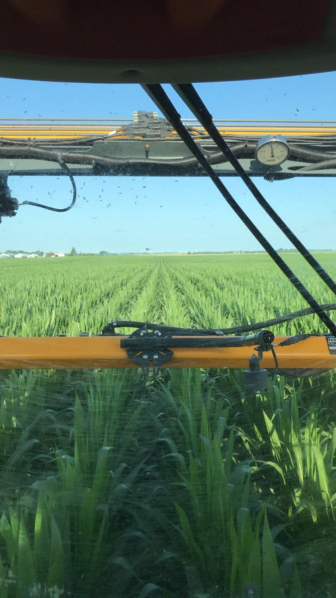 A beautiful morning to spray corn fungicide! #precisionspraying #basf #hartmanfarms #channelseed #hagie #betterthanaplane #crop19 #spray19<br>http://pic.twitter.com/7YvrqzrXF2