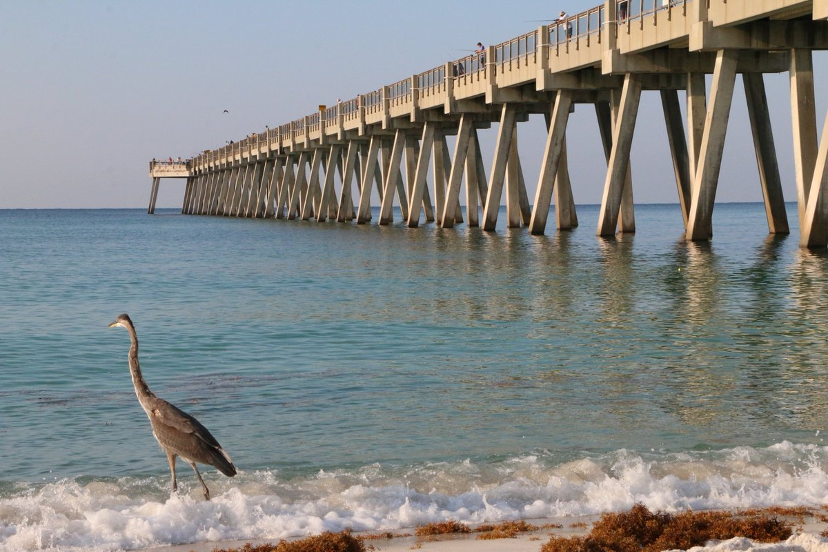 There was lots of fishing happening at the pier a couple mornings ago!! @RelaxInNavarre