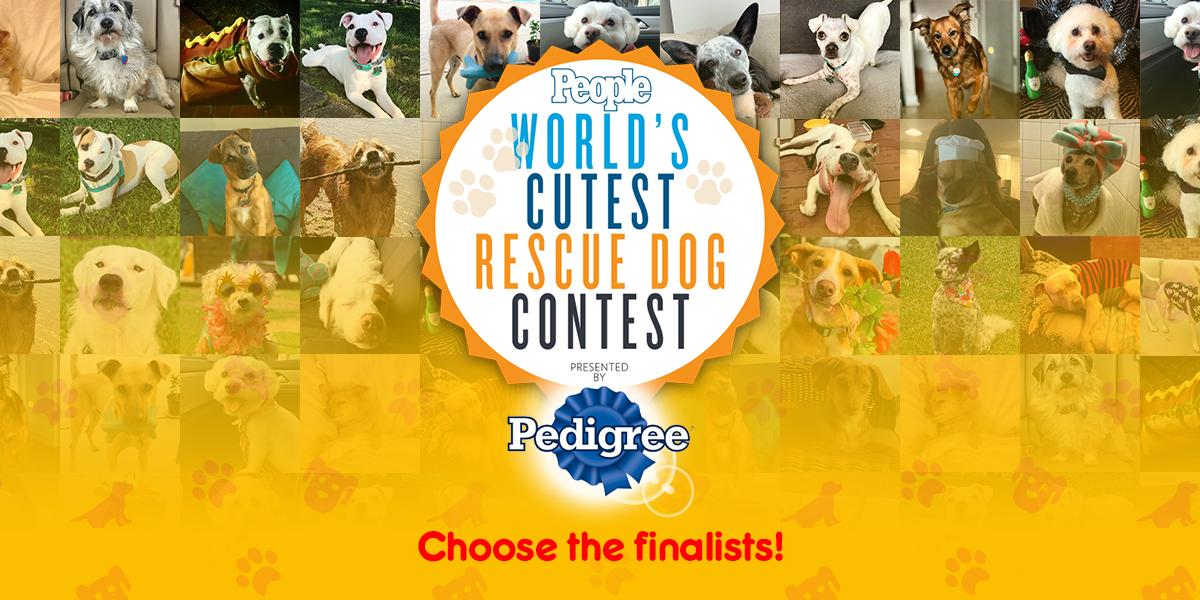 Don't miss your chance to vote for PEOPLE's World's Cutest Rescue Dog! Help one of these amazing animals become a furry finalist. But you'll have to hurry, voting ends on August 2nd. #PEDIGREE https://t.co/qnLf3oyba7 https://t.co/YU2Czm0Eqq