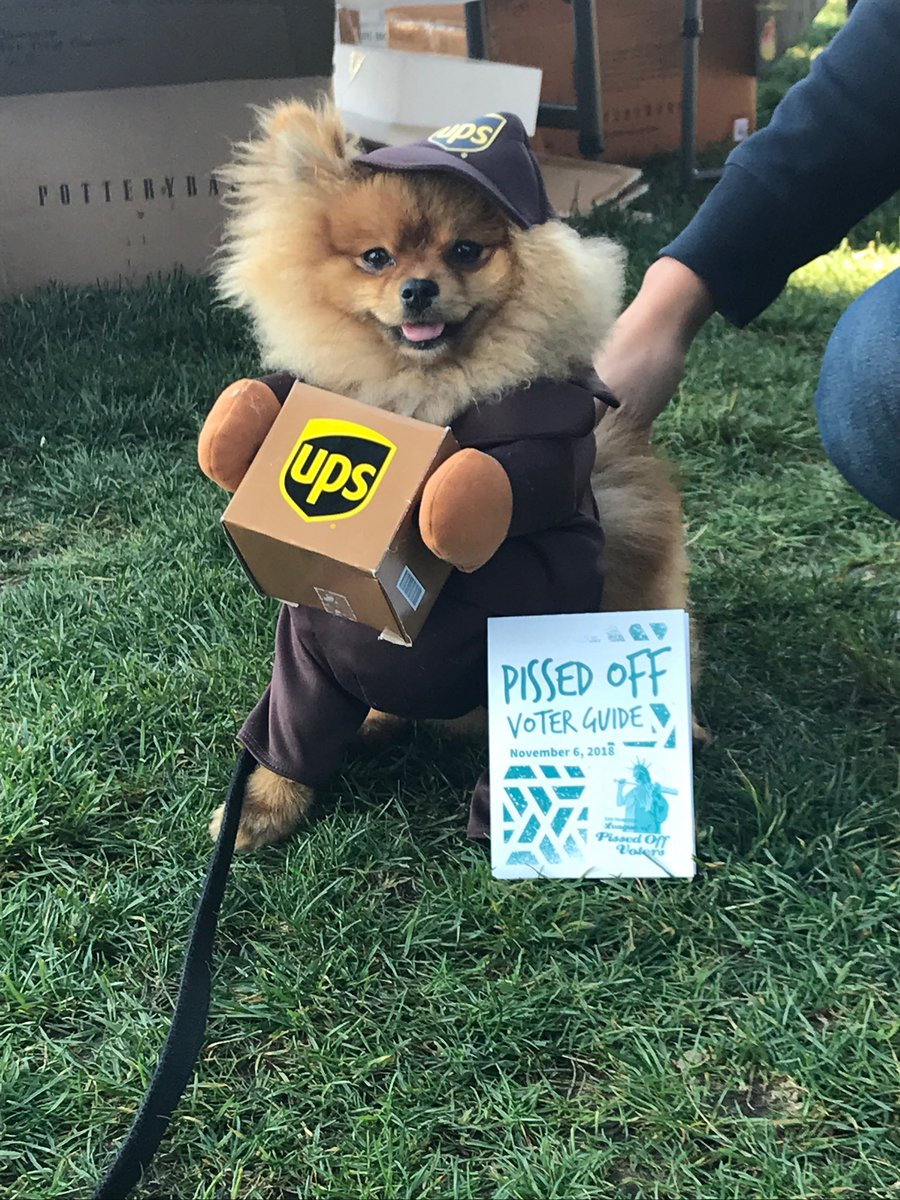 #tbt Bark the Vote 2018 We love campaign pets!
