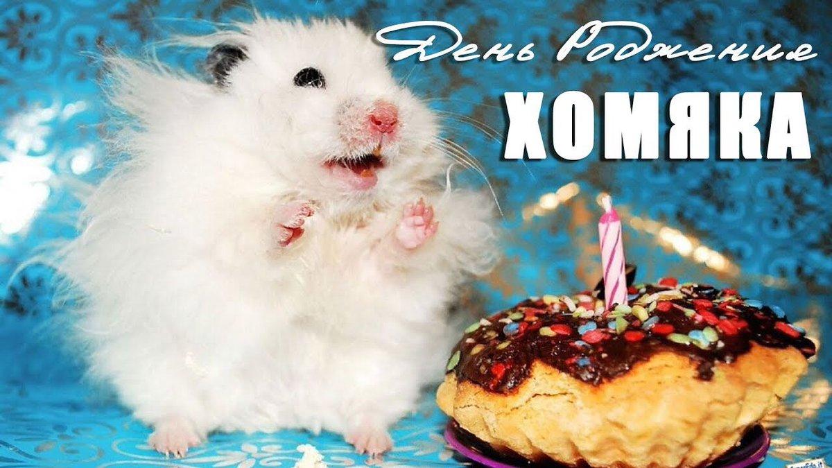 Открытки с хомяком на день рождения, открытку 55-летию