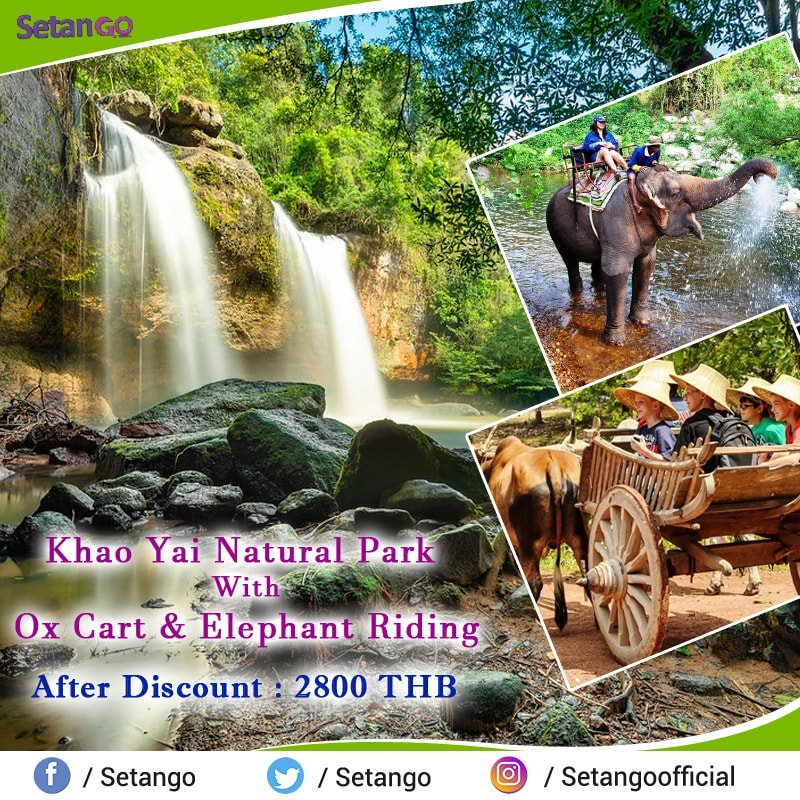 Khao Yai is one of the best national park in Thailand which is always attract the worldwide travelers, this park best known for their awesome Natural beauty and easy to see Interesting wild Animals.. #amezingthailand #khaoyai #wildlife
