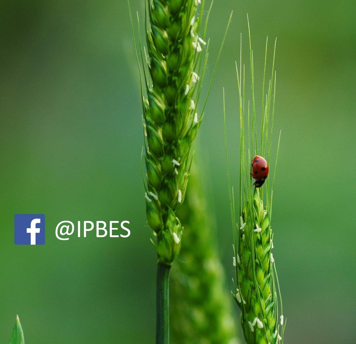 IPBES on Twitter: