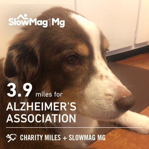 Recovery run. Murphy remains unimpressed. 3.9 @CharityMiles for @alzassociation. Thx #SlowMag for sponsoring me.