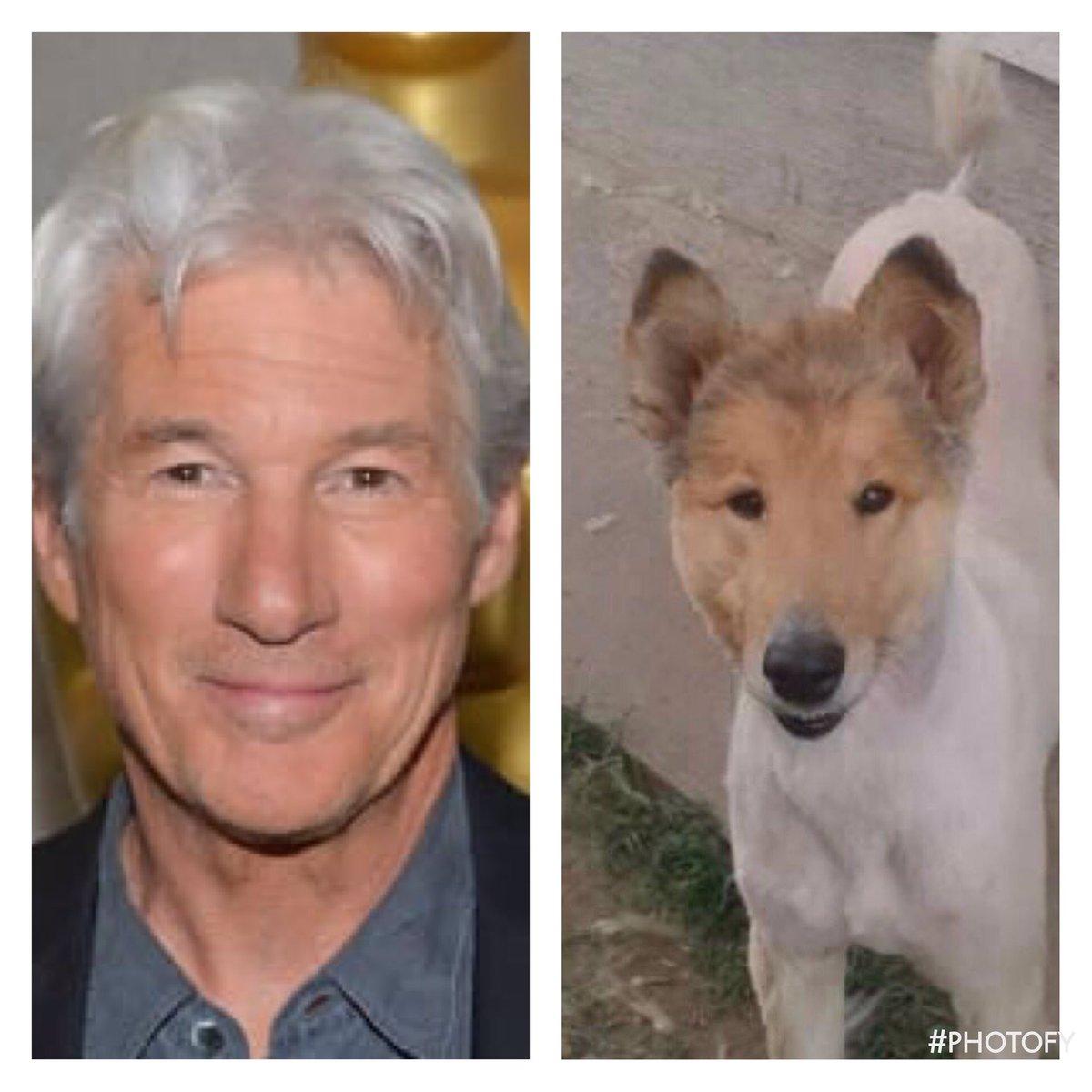 dog that looks like richard gere