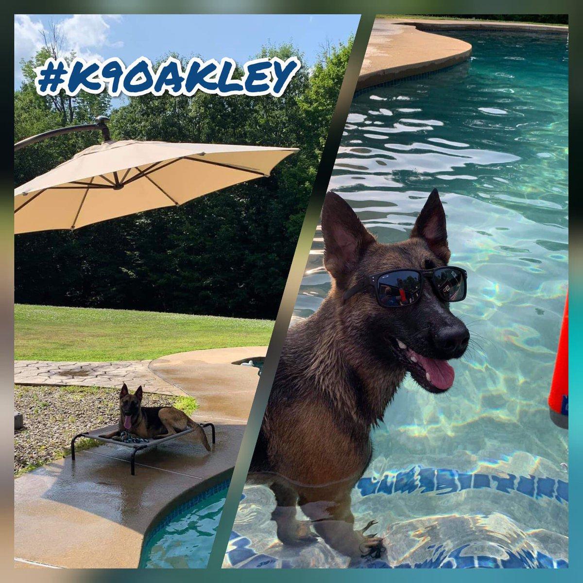 K-9 Oakley enjoying some water therapy to beat the heat!#k9oakley #nhdoc #watertherapypic.twitter.com/vvd99olliI