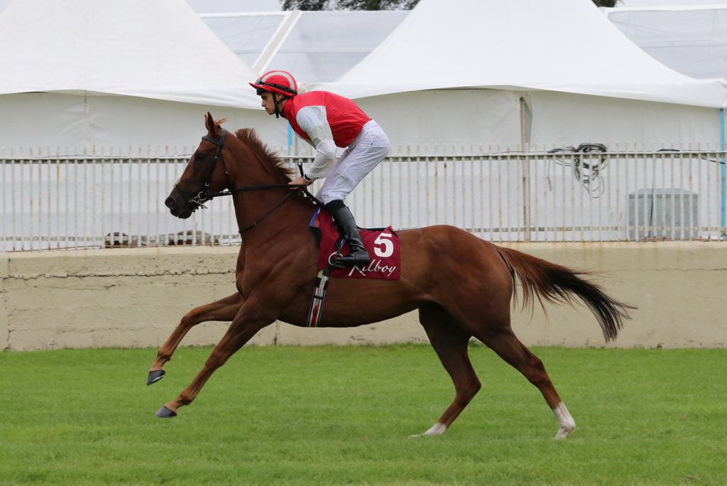 Image result for red tea horse