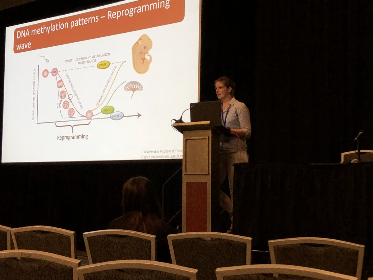 Next on stage at @SSRepro #ssr2019, @LM_Legault presenting our work on Impact of Early Embryonic Prenatal Alcohol Exposure on the Epigenome and Cognitive Functions. #epigenetics @RQReproduction @CRRF_FMV<br>http://pic.twitter.com/Uzt3s97Cs0