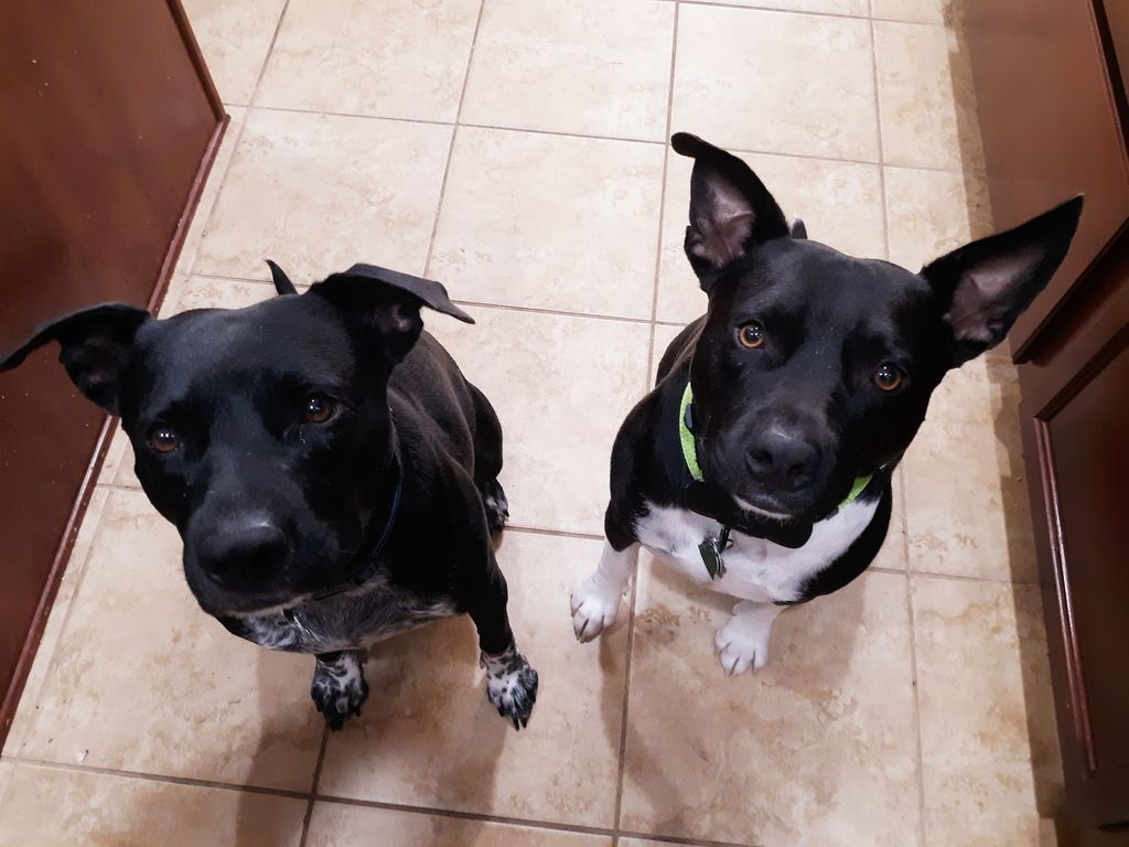 I don't know if the brothers can sense fear but they can definitely sense lunch meat. #dogs #sense #food #lunchmeat #ham