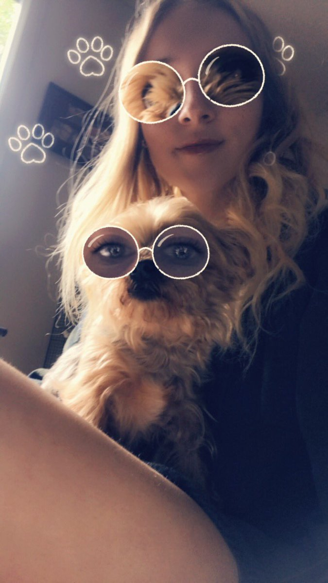 My dog looks sassy asf   #pets #funny #Snapchat #sassy #kitten #dog #yorkie #tabby #love #lmao