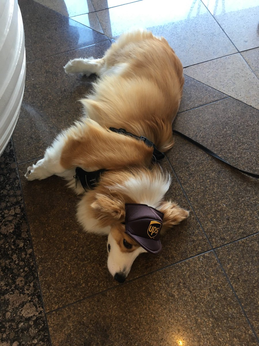 This adorable pup is #SDCC50 *done*!   @SD_Comic_Con  @ParksAndCons  #SDCC2019 #SDCCdogs #SDCCpups<br>http://pic.twitter.com/VNWK6pbXWo