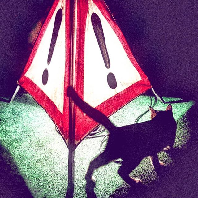 Beware the cat! . . . . #warning #cat #chat #attention #contrast #triangle #roadsigns http://j.mp/2Y3wNWP