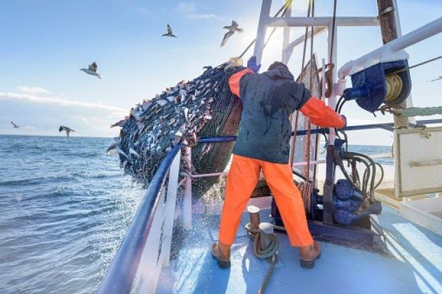 The real threat to the #ocean is the #fish on your plate – not the #straw in your drink! https://buff.ly/2JAJNPP #pollution