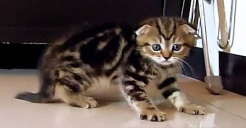 Little Neo is a #Ninja #Kitten ! - We Love Cats and Kittens https://buff.ly/2y1lELM #catlover #CutenessOverload