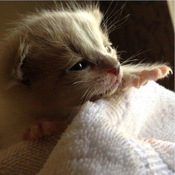 Awwww, sooo sweeet ...   #Cats #Cat #Kittens #Kitten #Kitty #Pets #Pet #Meow #Moe #CuteCats #CuteCat #CuteKittens #CuteKitten #MeowMoe   https://www.meowmoe.com/413220/awwww-sooo-sweeet-54/…   .