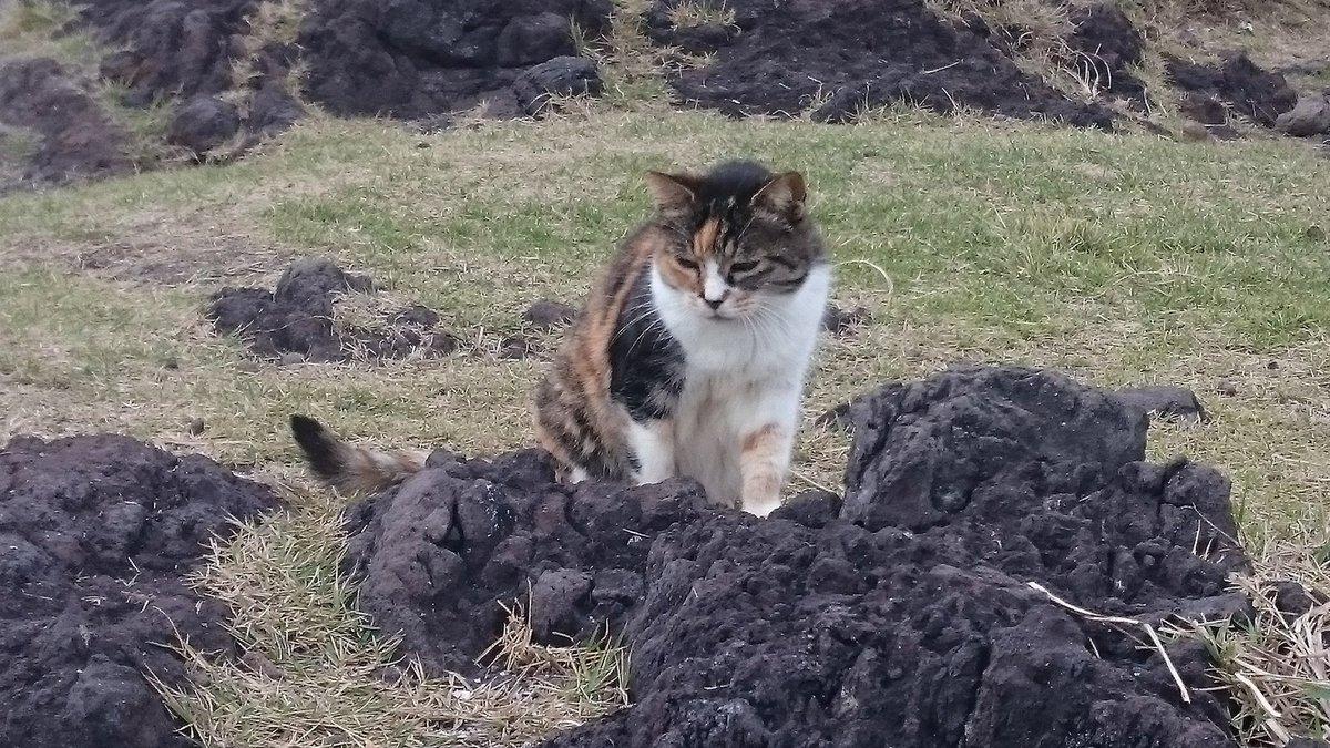 野良ちゃんたちです (tabaja2340)さんより ...   #Cats #Cat #Kittens #Kitten #Kitty #Pets #Pet #Meow #Moe #CuteCats #CuteCat #CuteKittens #CuteKitten #MeowMoe   https://www.meowmoe.com/413222/%e9%87%8e%e8%89%af%e3%81%a1%e3%82%83%e3%82%93%e3%81%9f%e3%81%a1%e3%81%a7%e3%81%99-tabaja2340%e3%81%95%e3%82%93%e3%82%88%e3%82%8a-5/…   .