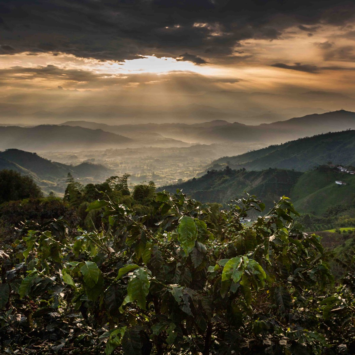Each cup of Nescafe Gold contains Arabica beans, handpicked in the mountains of countries like Colombia, Brazil, Honduras, Vietnam and Indonesia  http://bit.ly/2S7fW46