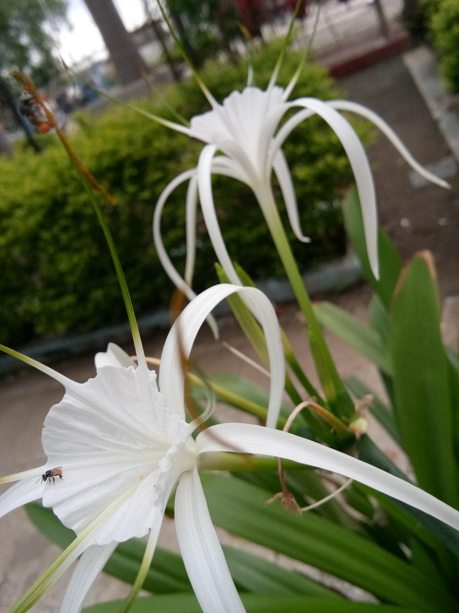 🌷 #MondayMorning #MondayMotivation #MyClick #Flowers