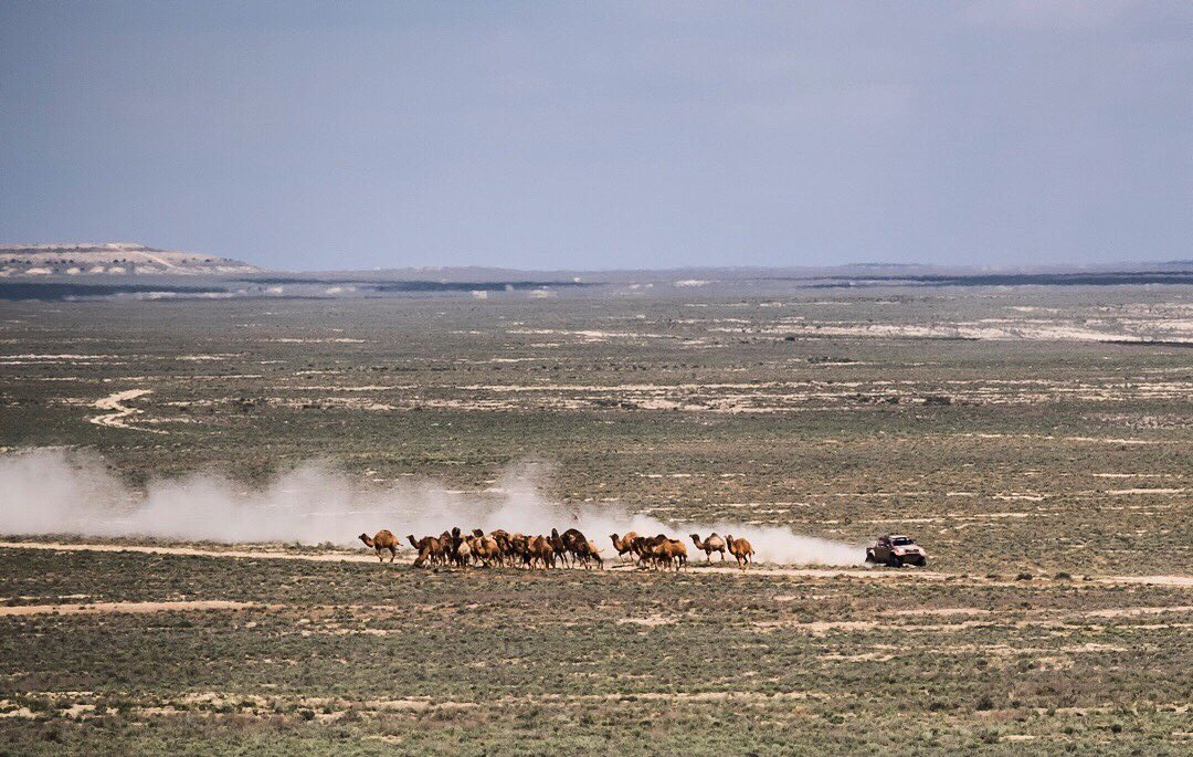 I am not a shepherd, but these camels seem to be listening to me  #fullattack #dakar2019 #dakar2020 #dakarsaudi #dakar #dakarrally #rallydakar #karcherlietuva #4x4offroad  #viadalietuva #dakarlegend #rallydakar2019 #shelllietuva #offroad #4x4 #offroadlife @dakar<br>http://pic.twitter.com/XtiBz84VNR