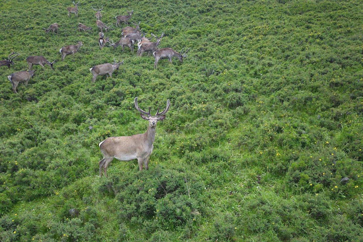 Oh #deer! Midsummer life on the grasslands of Gansu, NW China #FlyOverChina