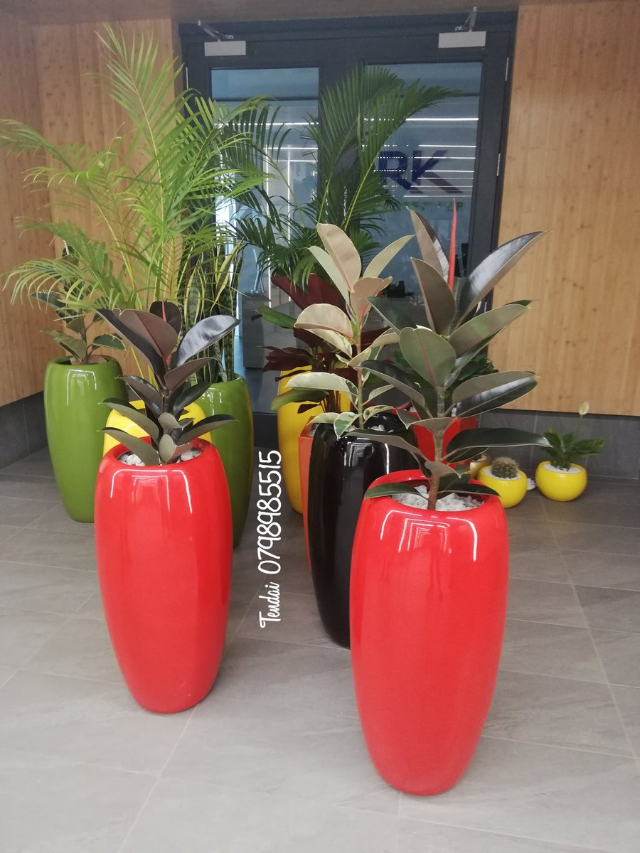 We custom make and deliver potted plants to your doorstep.... Try us call/whats app 0798985515. <br>http://pic.twitter.com/EnImBMgGAu