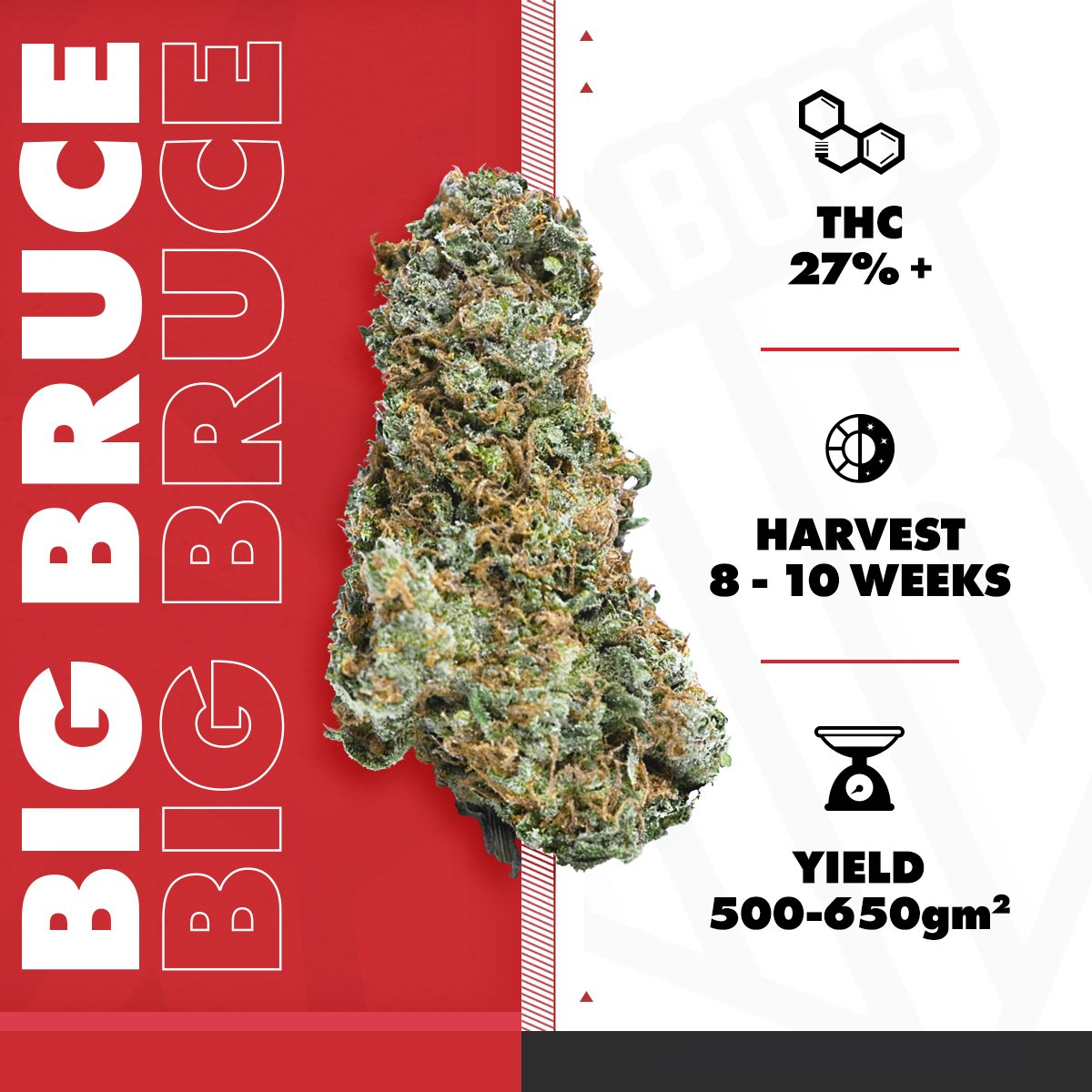 For those who like their weed strong!  https://mega-buds.com/product/big-bruce/ … #cannabis #weed #megabuds