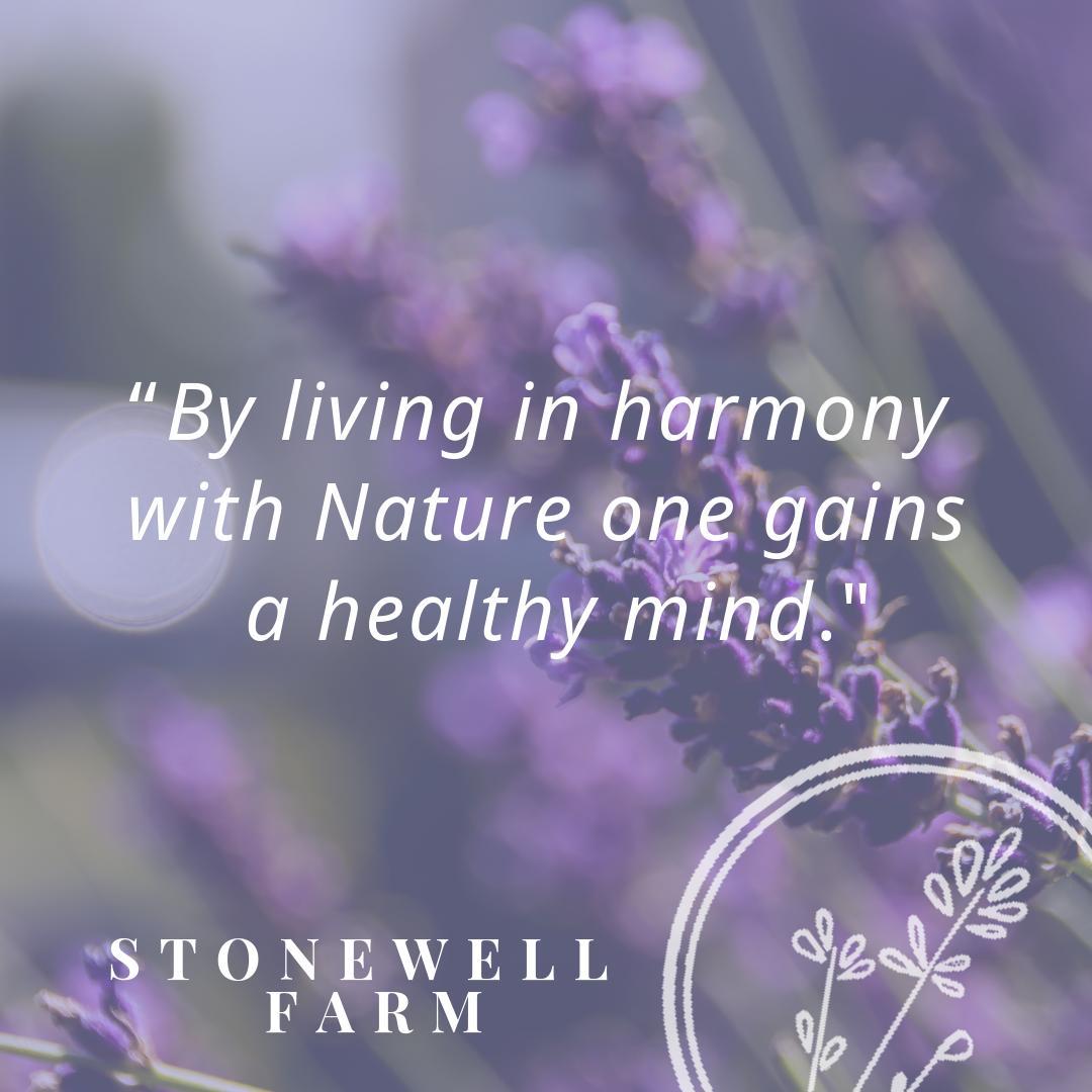 #StonewellFarm #LavenderFarm #FarmGrown #HealingOils #EssentialOils #HealthyLiving #TorontoPhotographers #Natural #Lavender #TorontoTourism #Caledon #Erin #HaltonHills #Georgetown #Bolton #Orangeville #Brampton #Guelph #RealHeadwaters #DufferinCounty https://www.stonewellfarm.ca/