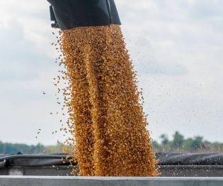 Market Wrestles with #Trade Talks, #Crop Prospects | https://buff.ly/2M45OrT #grain #tradewar