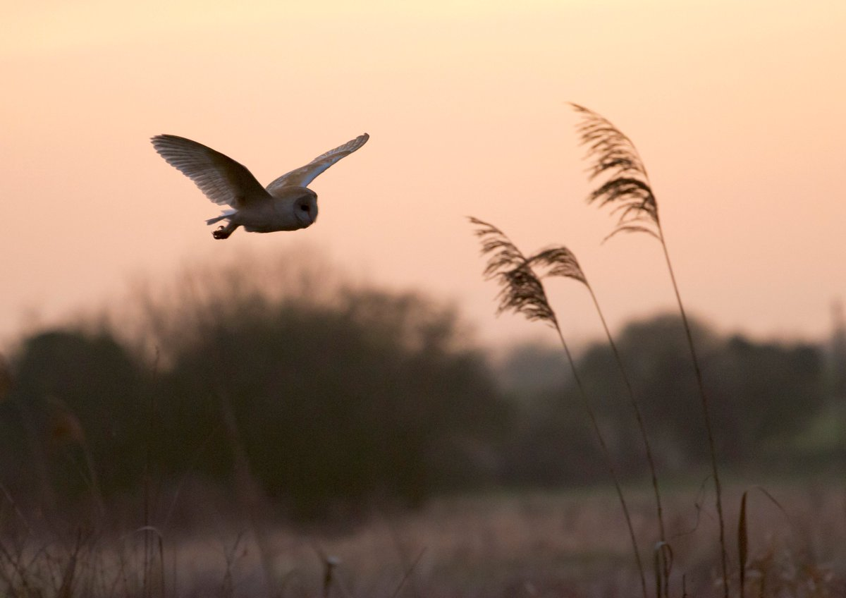 Gwent Levels barn owls: no longer at threat from six lanes of traffic through the wetland landscape. Thank you @fmwales  #NoNewM4 Let's celebrate!<br>http://pic.twitter.com/OCIWojZ2B5