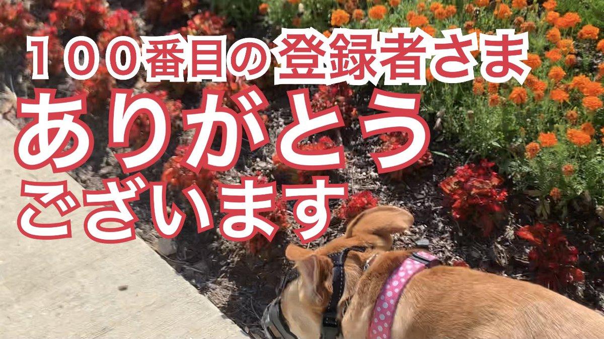 散歩 代行 の 犬
