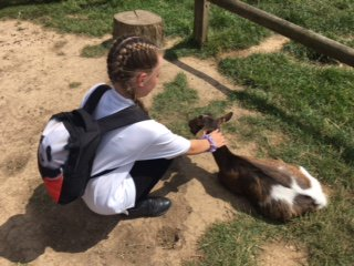 Goat herders in the making 😉@ZSLWhipsnadeZoo