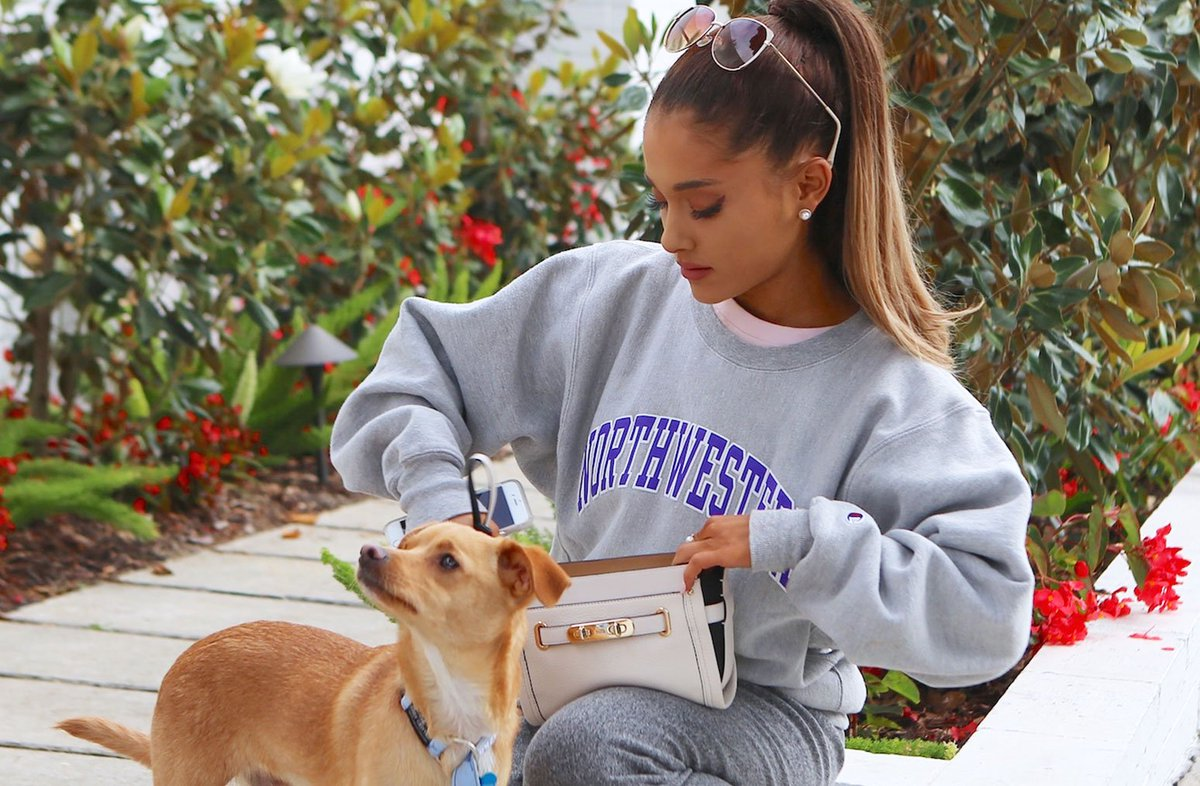 Who is your favorite pop star pet? Vote for #ArianaGrande's dog Toulouse, #TaylorSwift's cats & more  https:// blbrd.cm/yZkl1z     <br>http://pic.twitter.com/zB7DszHHVl