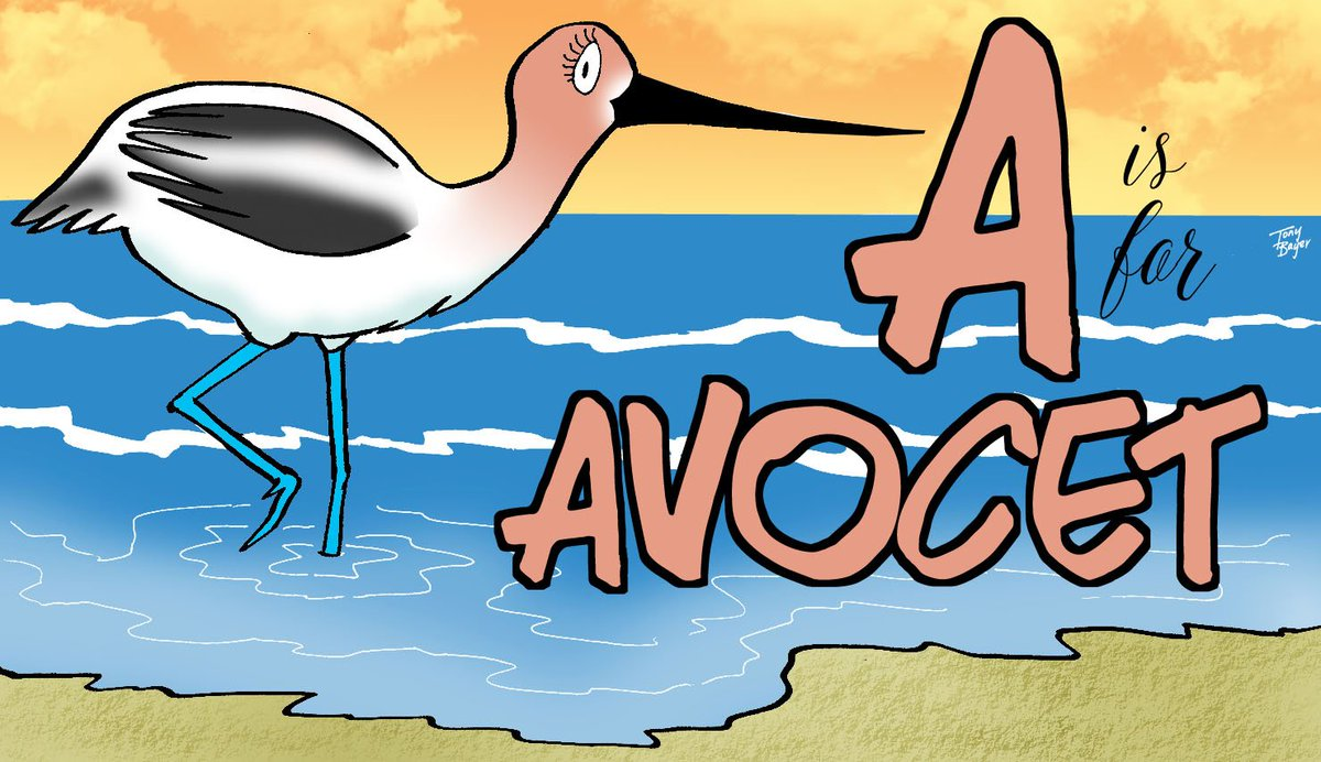 Avocet @AnimalAlphabets  #AnimalAlphabets #birds #cartoon #art #illustration #kidlitart #drawing #Hootsuite #follow