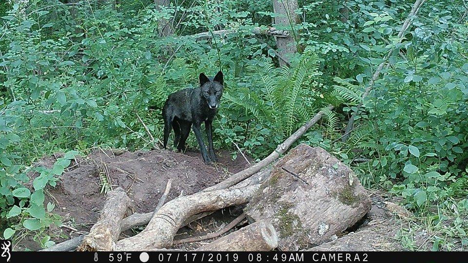 Wolf Patrol (@teamwolfpatrol) | Twitter