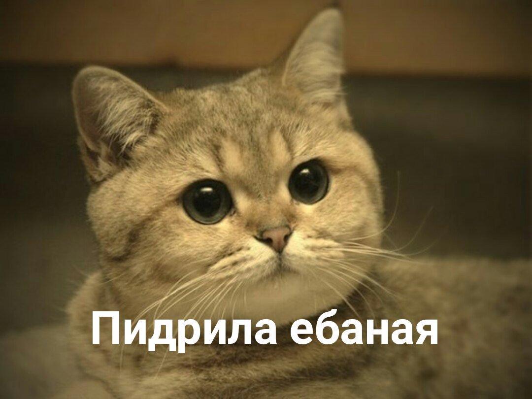оформлении ацтань картинка с котиком соскучились