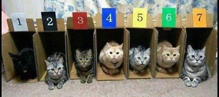 #OddThingsToAskACoWorker Do you like cat racing?  <br>http://pic.twitter.com/rr36fHUtjr