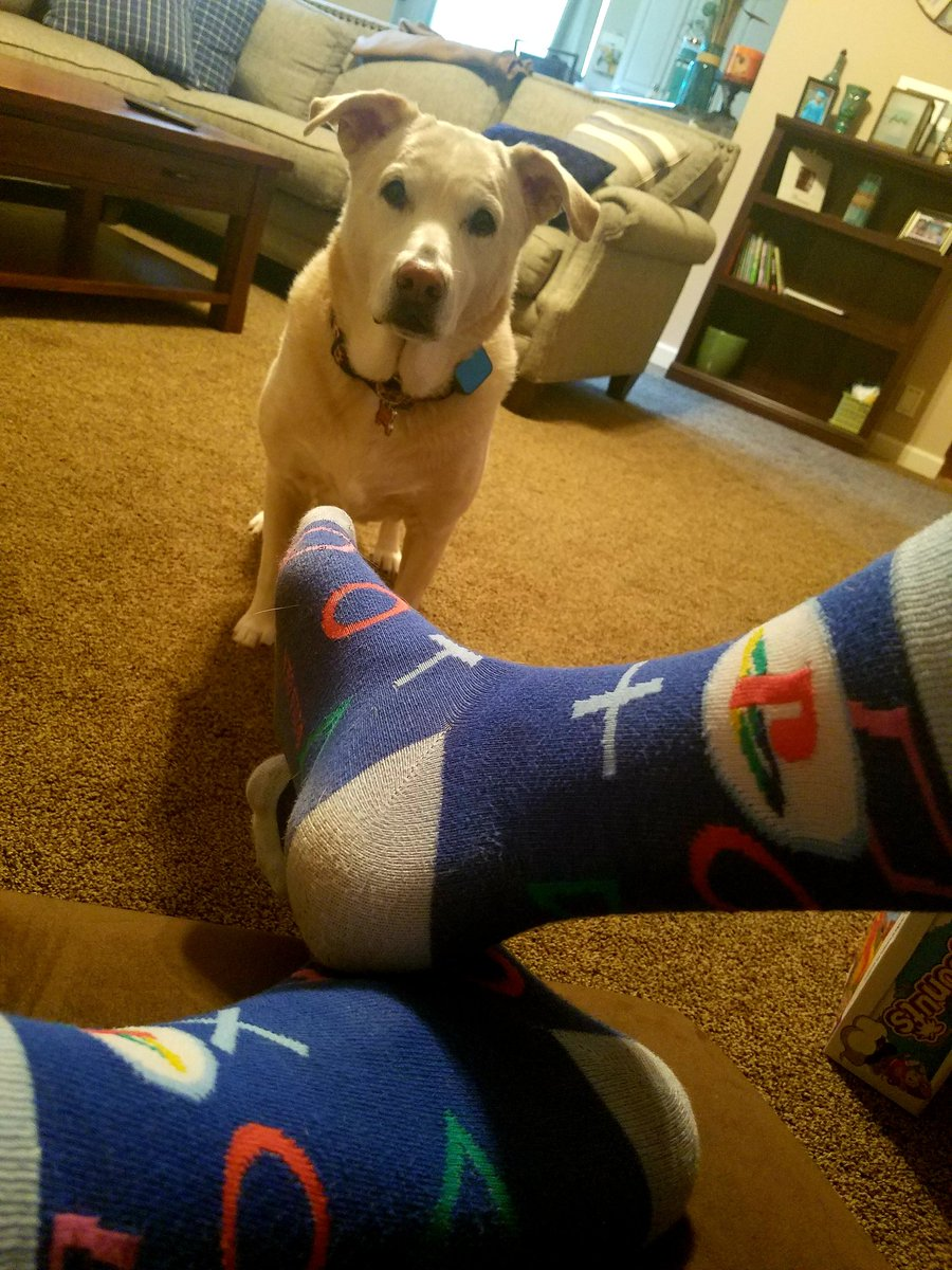"""Tawnie says """"let's play some video games!"""" #PS4 #twitch #socks"""