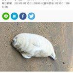 悪いニュースじゃなくて?動物たちのほっこりするニュースが増えてほしい!